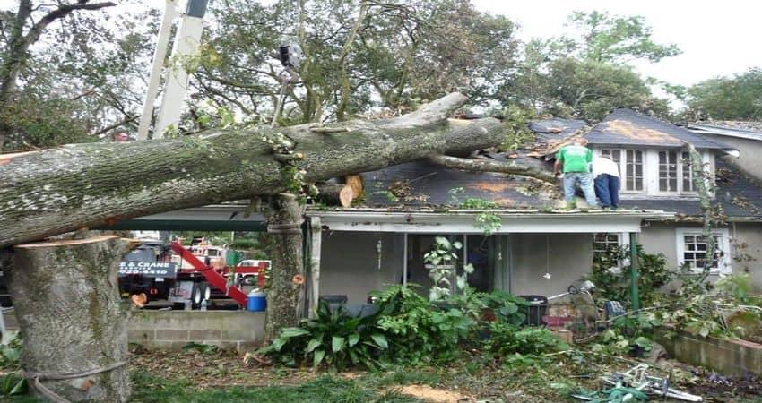 tree-services-2-min