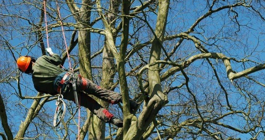 tree-services-3-min